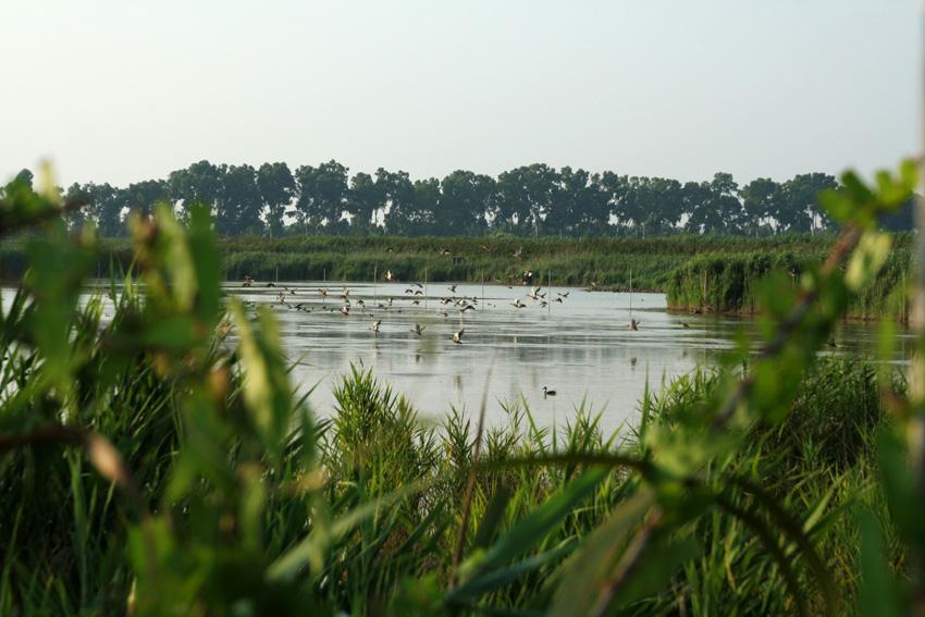 Oasi di Macchiagrande - I Parchi Naturali, Riserve e Oasi del Lazio