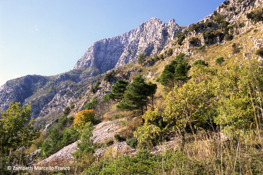 Monte Fammera da Ausonia (Selvacava) | Escursioni, Sentieri e Trekking nel Lazio