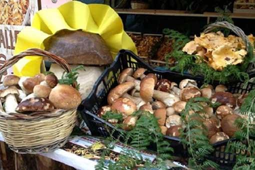 Sagra del Fungo Porcino a Rocca Priora (RM) | Sagre nel Lazio