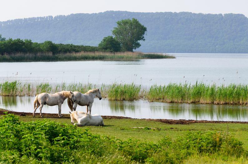 Lago di Vico | Cosa vedere e come visitarlo
