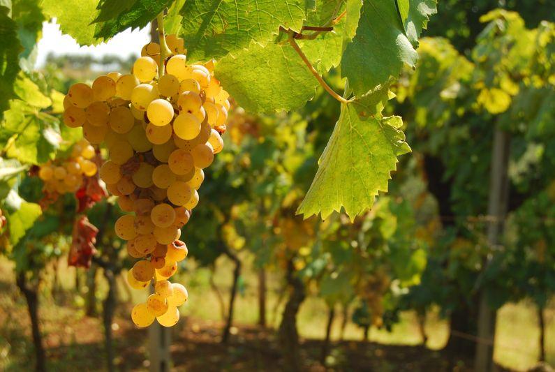 La Strada dei Vini dei Castelli Romani | Strade del Vino nel Lazio