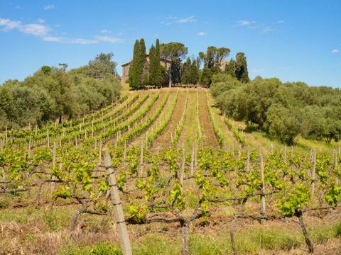 Strada del Vino Cesanese di Olevano Romano | Strade del Vino nel Lazio