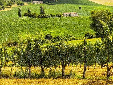 Strada del Vino della Teverina | Strade del Vino nel Lazio