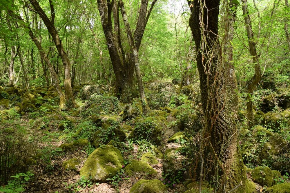 Selva del Lamone - Sentiero di Rosa Crepante   Escursioni, Sentieri e Trekking nel Lazio
